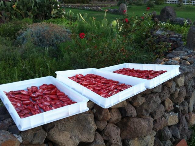 vakantie sardinie in country resort capo nieddu (7).jpg