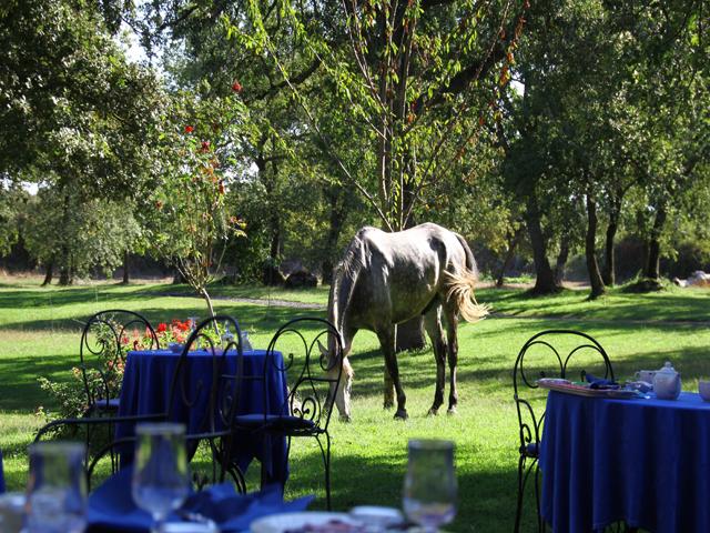 vakantie-paardrijden-sardinia-sardinia4all