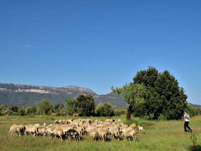 agriturismo-sardinie-mandorli- sardinia4all (3).jpg