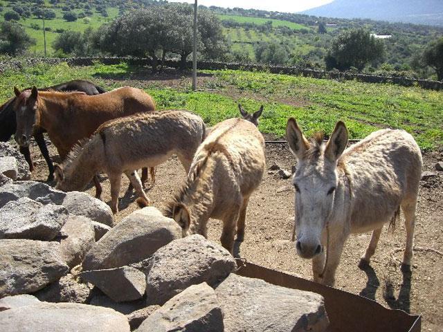 agriturismo sardinië - overnachten bij de boer