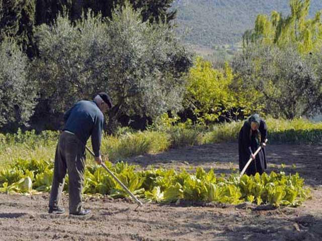 agriturismo in sardinie - Guthiddai in Oliena (14)