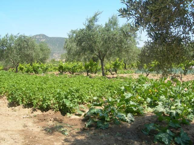 agriturismo in sardinie - Guthiddai in Oliena (20)