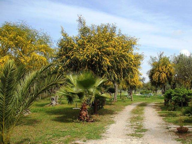 Alghero - B&B Villa Grazia met zwembad- Sardinie (4)
