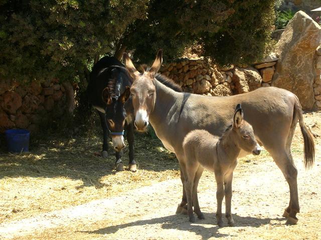 Podere Monte Sixeri - Alghero - Sardinië